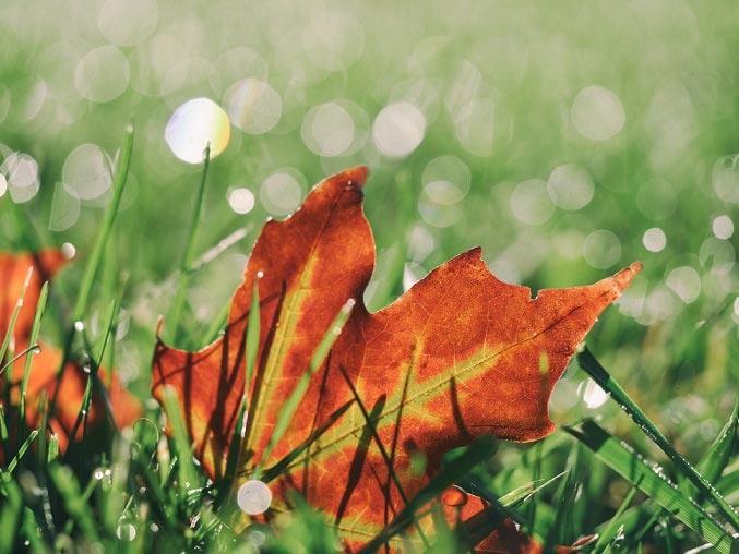 bladeren op je gras
