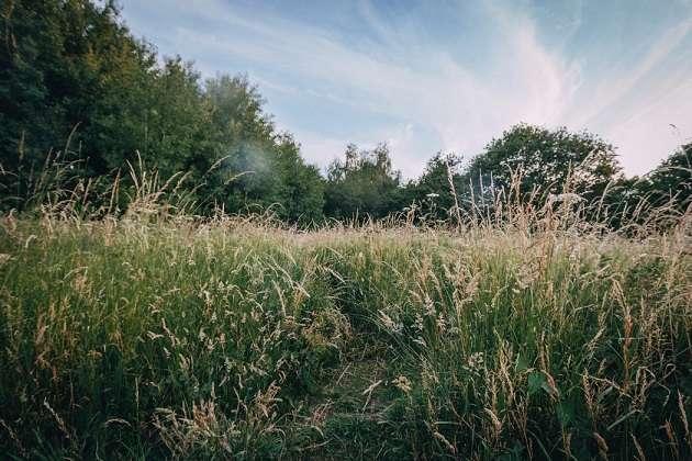 hoog gras maaien